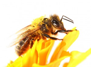 bumble bee sat on a flower_b