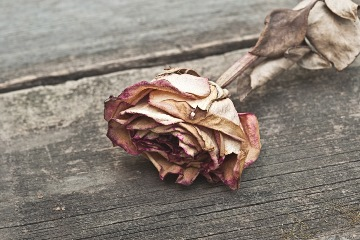 dried rose_b