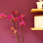 pink orchid next to shelves_b